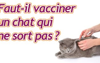 vacciner un chat
