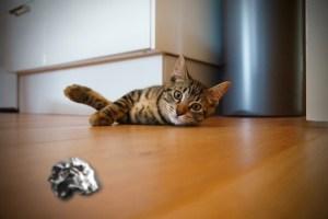 Jeu pour chat avec boule de papier
