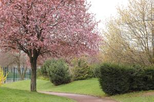 Parc Suzanne Lenglen