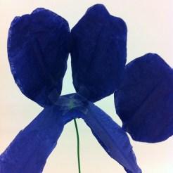 Inside of the iris