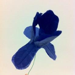 Finished iris!
