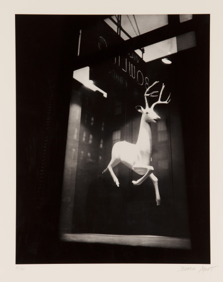 Berenice Abbot, Untitled (Reindeer), print 1983, Dallas Museum of Art, Foundation for the Arts Collection, gift of Morton and Marlene Meyerson