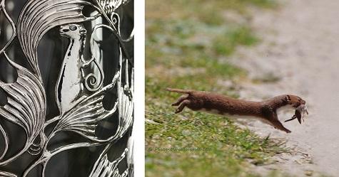 Detail of Wittgenstein Vitrine; Marcel de Bruin, Weasel, photogrpah. Photo-marcelloromeo. Web. November 24, 2014