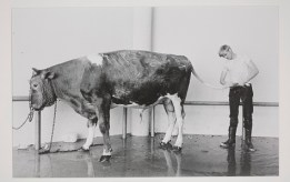 Geoff Winningham, Grooming for the Houston Livestock Show and Rodeo, negative 1971, print 1976, gelatin silver print, Dallas Museum of Art, gift of Prestonwood National Bank 1981.36.14