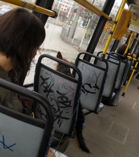 w_tramwaju