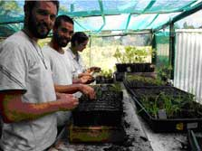 Polly, Lachlan and the author pricking out Hebe seedlings.