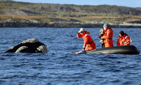 Scientists get up close and personal with a southern right whale!