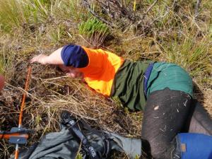 Haast kiwi ranger Kath Morris up to her armpits in a tokoeka nest. Photo: Haast Tokoeka Kiwi Team.