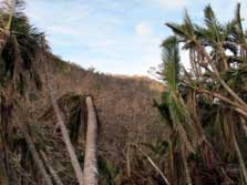Forest flattened by Cyclone Bune.