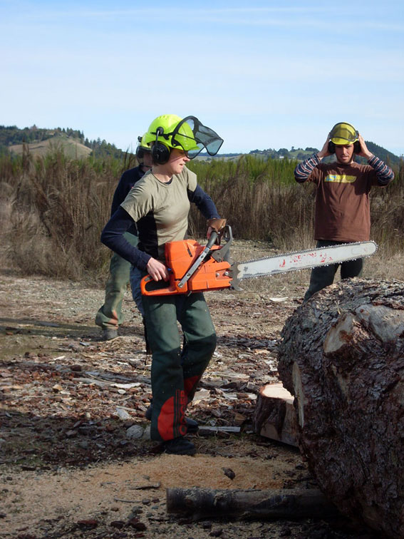 Sacha holding a chainsaw about to cut through a large log.