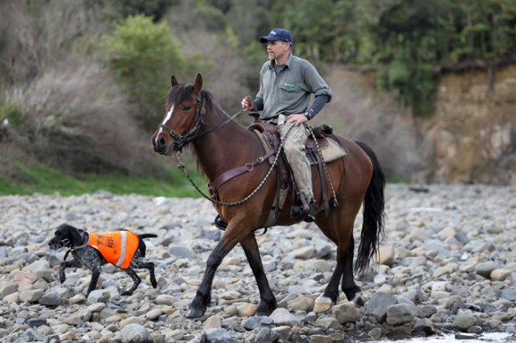 Whio Recovery Group Leader Andy Glaser crosses the stream on horseback.