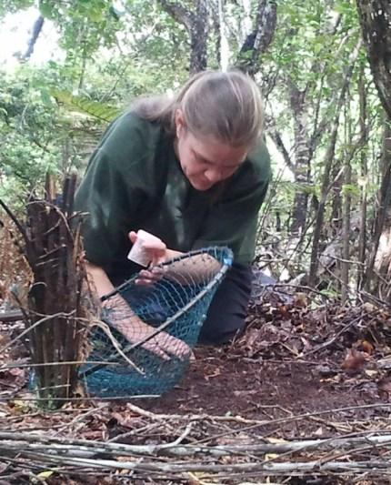 Kari Beaven prepares a catch net on Ulva Island.