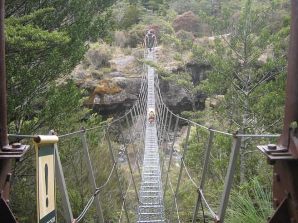 Fern the whio dog crossing a swing bridge.