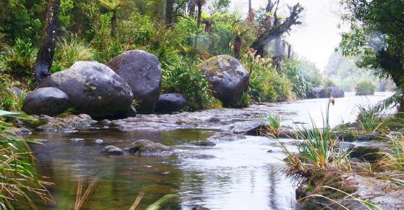 A stream in the Kaimais. Photo: Dennis Kuhn/flickr (cc)