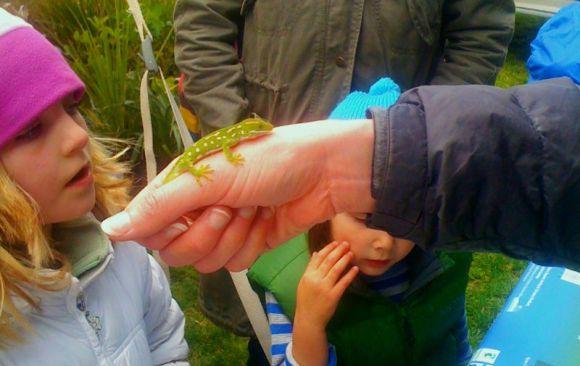 A young girl meets a Wellington gecko up close.