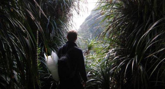 A clearing in the bush at Paraninihi (White Cliffs), Taranaki.