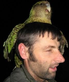 Sirocco on Jeff's head.