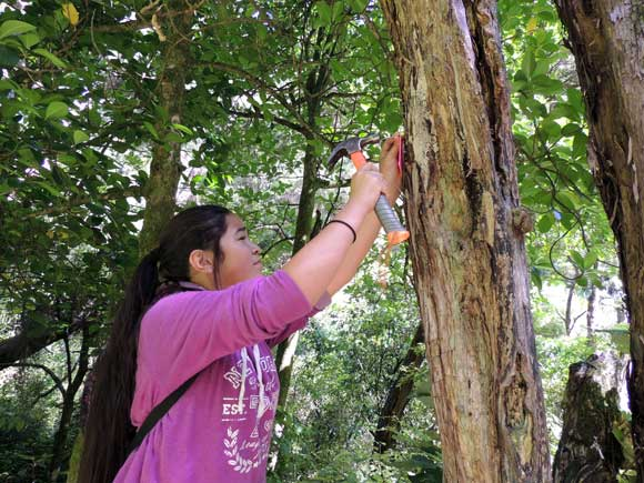 Te Karaka student, Courtney Fleming, hammers a pink triangle, indicating the trap number location, onto a nearby tree on the main track
