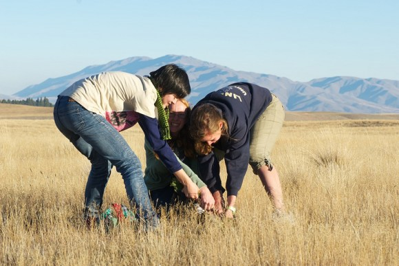 Manu, Rachel, and Jenny deal to a wilding pine in the Tekapo Scientific Reserve. Photo: Jon Sullivan (CC BY-NC 2.0).