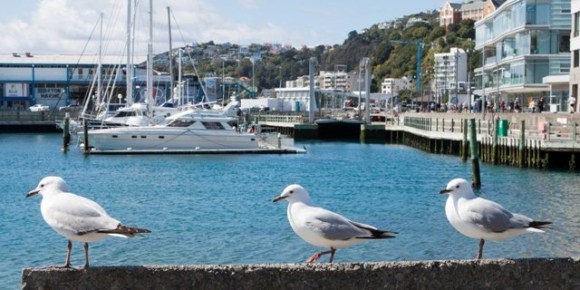 Bird on the wharf at Chaffers marina, Wellington.