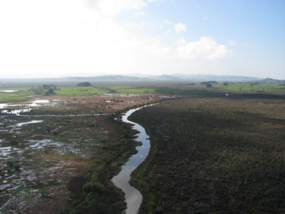 Swamp land at Whangamarino.