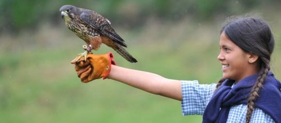 Girl with New Zealand falcon/kārearea.