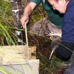 Jo Ritchie releasing a kiwi into a temporary wooden burrow.