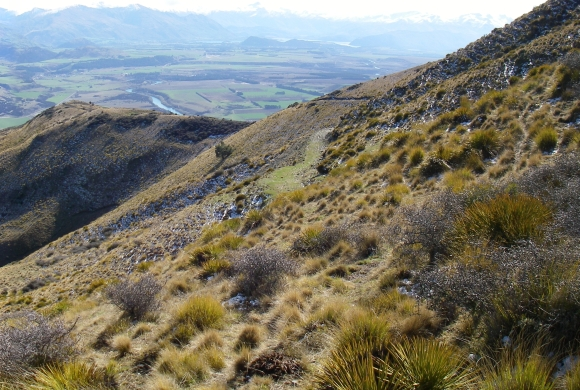 Long Gully near the Clutha River in Otago.