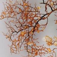 Black coral (Leiopathes spp.) Specimen image NIWA.