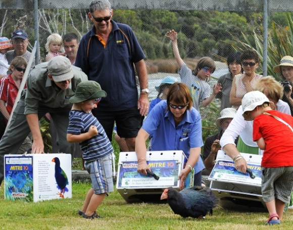 Kawa being released  by Mitre10 staff at Te Anau Wildlife Park. Photo: Barry Harcourt.