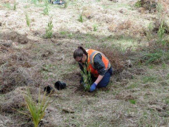 Planting a seedling in soil.