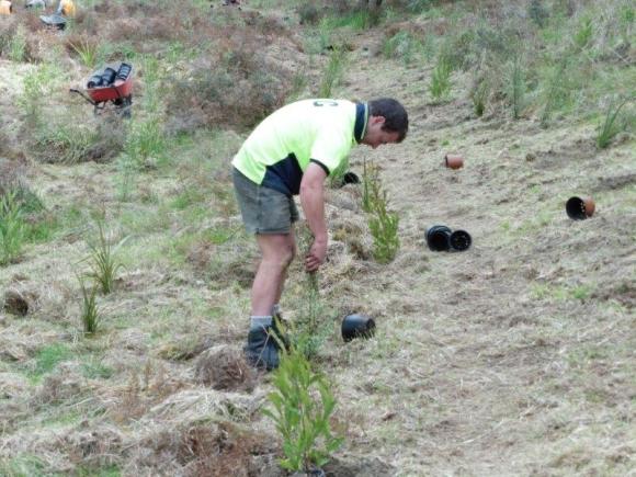 Planting seedlings in sandy soil.