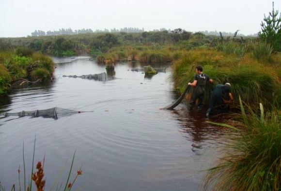 Surveying for freshwater fish at Munroe Dam.