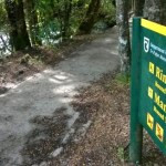 Rimu Walk in Mangawhero Forest.
