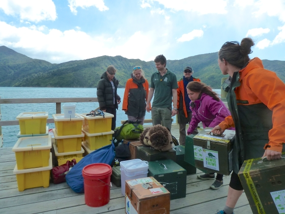 Equipment, DOC rangers and volunteers on the jetty at Motuara Island.
