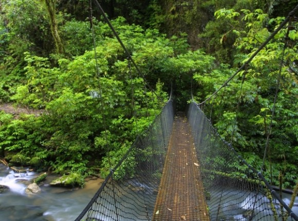 Footbridge over a a river in the Ruakuri Scenic Reserve. Photo: Peter Nijenhuis | CC BY-NC-ND 2.0.