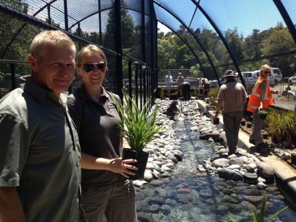 Rangers planting at the new Tongariro whio rearing facility.