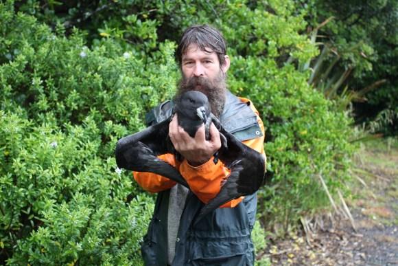 Ranger Chippy Wood of Punakaiki holding a juvenile Westland petrel.