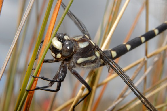Dragonfly. Photo: Jon Sullivan | CC BY-NC 2.0.