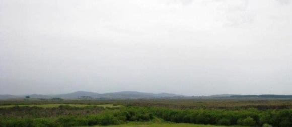 Whangamarino Wetland.