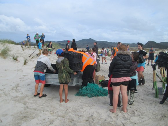 Dune planting with students on Kaitoke Beach.