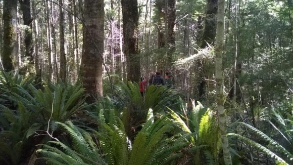 Student tracking kiwi in the forest.