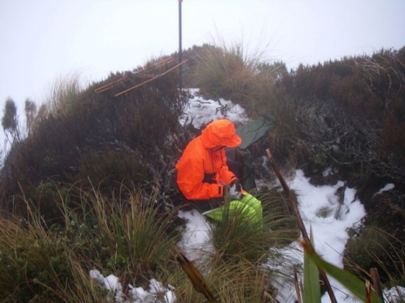 Picking up kiwi transponder signals in the Haast Kiwi (Tokoeka) Sanctuary.