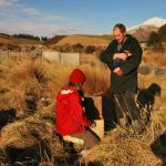 Placing a caught takahē in a transportation box..