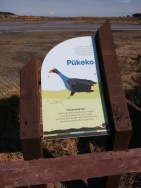 Pukeko sign.