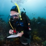 Don Neale hard at work counting invertebrates during a survey dive in Poor Knights Islands Marine Reserve. Photo: V. Zintzen, DOC.