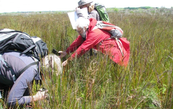 DOC botanists identifying plants at a Waikato wetland.