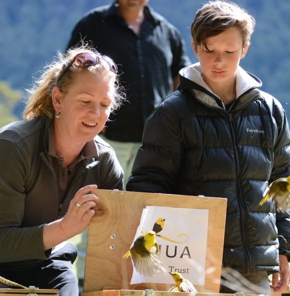 Mohua release in Eglinton valley. Photo: DOC.