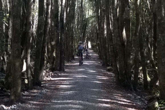 Biking a forested section of the West Coast Wilderness Trail.