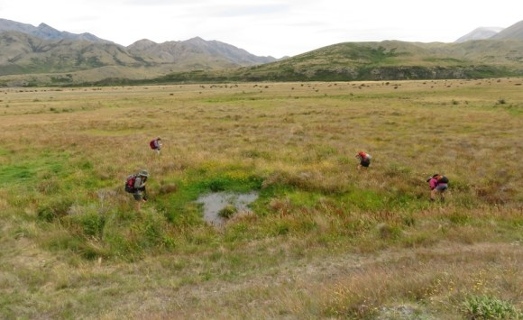 Sam Sutherland hunting for new plants near Clarence River.